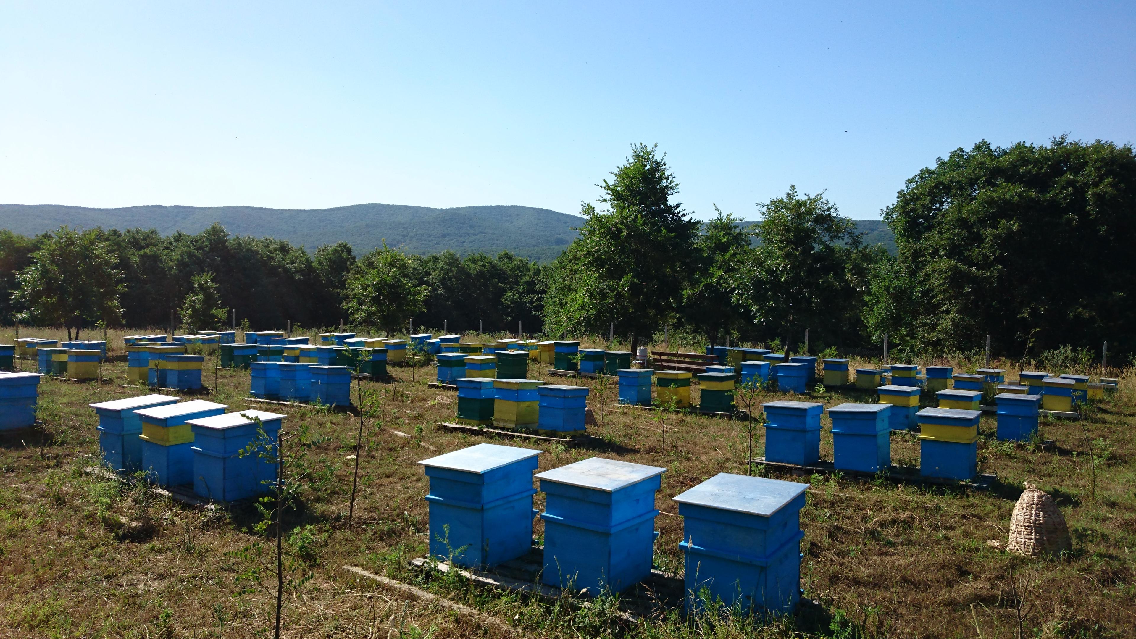 """The bee-garden in Burgas region near to """"Strandza"""""""